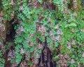 Долина бабочек. Остров Родос